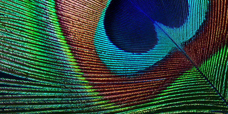 کیفیت پخش تصویر از حالتهای پیش فرض در Epson EH-TW7100